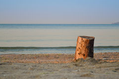 Tree stump on the beach. In Odessa royalty free stock images