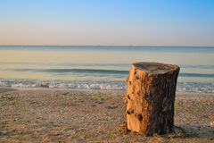 Tree stump on the beach. In Odessa royalty free stock photo