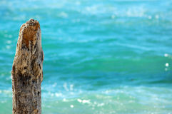 Tree stump and blue sea Stock Photography