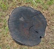 Tree stump. Burned tree stump in the grass Stock Photo