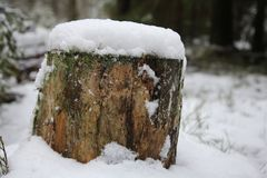 Tree stump close-up in the snow in a beautiful winter forest with a blurry background royalty free stock photo