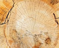 Tree stump closeup Royalty Free Stock Photo