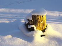 Tree stump covered with snow. Cap illuminated by the sun stock photography