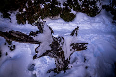 Tree stump covered with snow Royalty Free Stock Photo