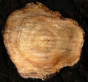 Tree Stump Cross Section Royalty Free Stock Photo