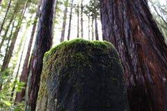 Mossy dark Tree stump Stock Photos