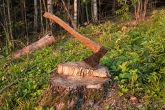 Tree stump, deforestation Royalty Free Stock Photos
