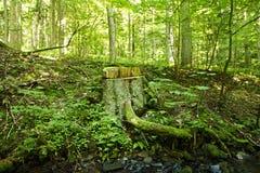 Tree stump on edge of forest Stock Photo