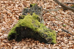 A tree stump. In the forest Stock Photos