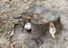 Tree stump in the forest Stock Photography