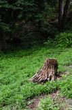 Tree stump in forest Stock Photo