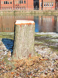 Tree stump. Stock Photography