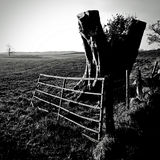 Tree Stump & Gate - rural Scotland. A tree stump next to a battered gate leading to winter pastureland in rural Scotland Royalty Free Stock Photos