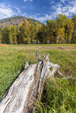 Tree stump in grass. Royalty Free Stock Images