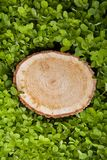 Tree stump on the grass Stock Photo