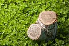 Tree stump on the grass Royalty Free Stock Images