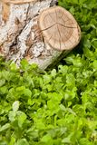 Tree stump on the grass Stock Image