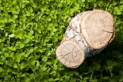 Tree stump on the grass Royalty Free Stock Image