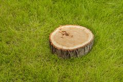 Tree stump on the grass Stock Photos