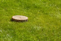 Tree stump on the grass Royalty Free Stock Photo