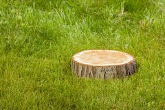 Tree stump on the grass Royalty Free Stock Photography