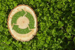 Tree stump on the grass with recycle symbol, top Royalty Free Stock Image