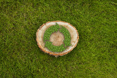 Tree stump on the grass with recycle symbol, top Royalty Free Stock Images
