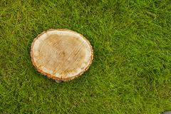 Tree stump on the grass, top view Stock Photos