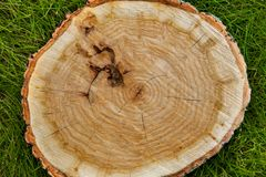Tree stump on the grass, top view Stock Photo
