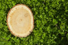 Tree stump on the grass, top view Stock Images