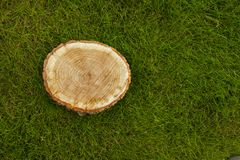 Tree stump on the grass, top view Royalty Free Stock Photos