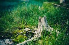 Tree stump in grasses