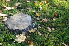 Tree stump Stock Photography