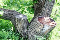 Tree and stump on green grass background stock photography