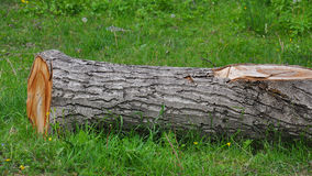 Tree stump on green grass Royalty Free Stock Image