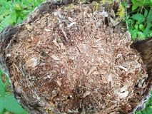 Rotted Tree Stump cut down. This is a tree stump that has been knocked down after having rot problems Royalty Free Stock Photography