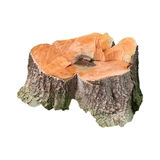 Tree stump isolated white Stock Image