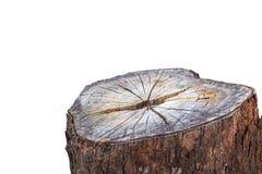 Tree stump isolated on white background.  Royalty Free Stock Image