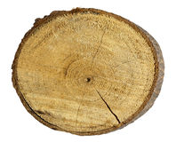 Tree stump isolated on white Stock Photo