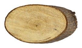 Tree stump isolated on white Royalty Free Stock Photo