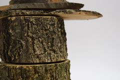 Tree stump, on white royalty free stock photography