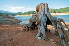 Tree Stump at a Lake Royalty Free Stock Photo