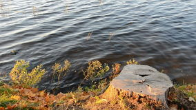 Tree stump on lake coast and water. Tree stump on the lake coast and water stock video footage