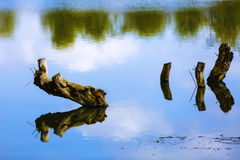 A tree stump in a lake with copyspace on sky's reflection on wat Royalty Free Stock Photos
