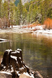 Tree Stump in the Merced River. Merced River in winter in Yosemite National Park, California Stock Images
