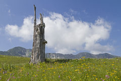 Tree stump in the mountains Stock Images