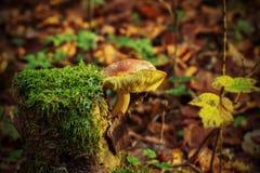 Tree Stump, Mushroom Stock Photo