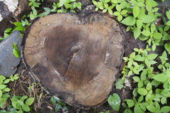 Tree stump in the park. Stock Image