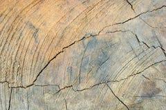 Tree stump pattern break texture Royalty Free Stock Image