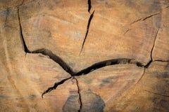 Tree stump pattern break texture Stock Photography